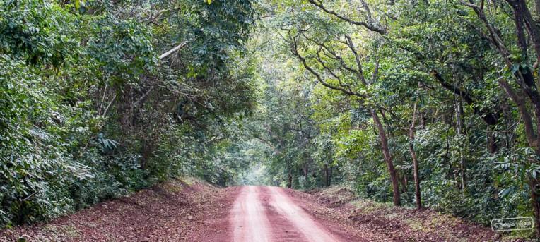 Budongo Forrest